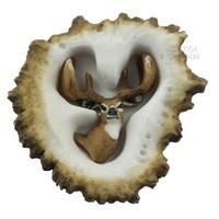 Sierra Lifestyles 681474, Pull, Elk Burr Pull, Whitetail Deer, Rustic Lodge Collection